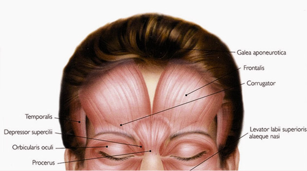 Facial anatomy what causes frown line - Dark Eye Circles by Dr Gerard Ee